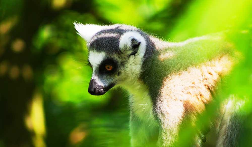 Podróże Afryka Madagaskar cover