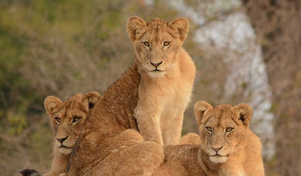 Podróże Safari RPA Nurkowanie Mozambik