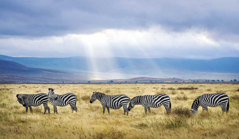 Podróże Afryka Tanzania cover