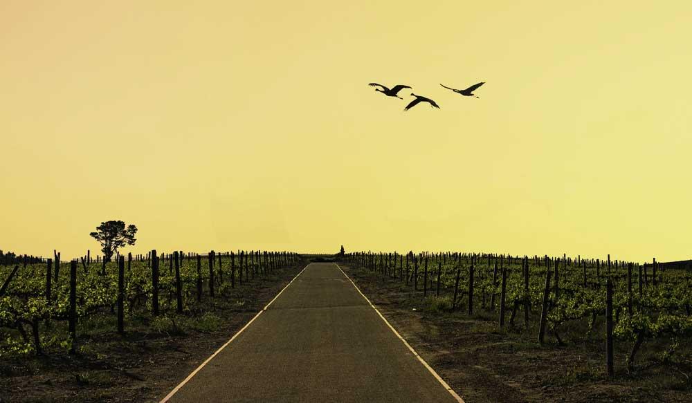 Podróże Winnice Afryki Południowej cover