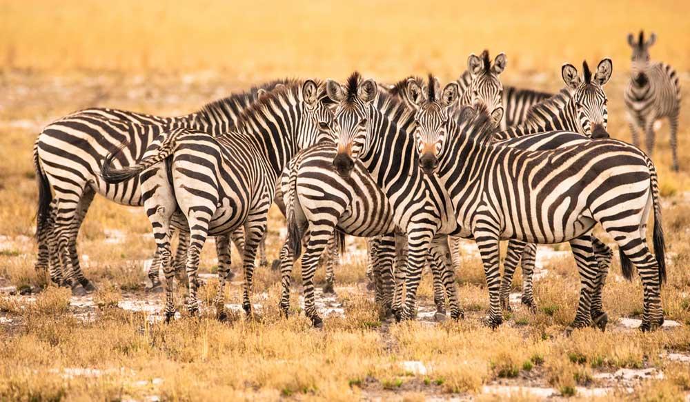Podróże Safari Zimbabwe Zambia Malawi