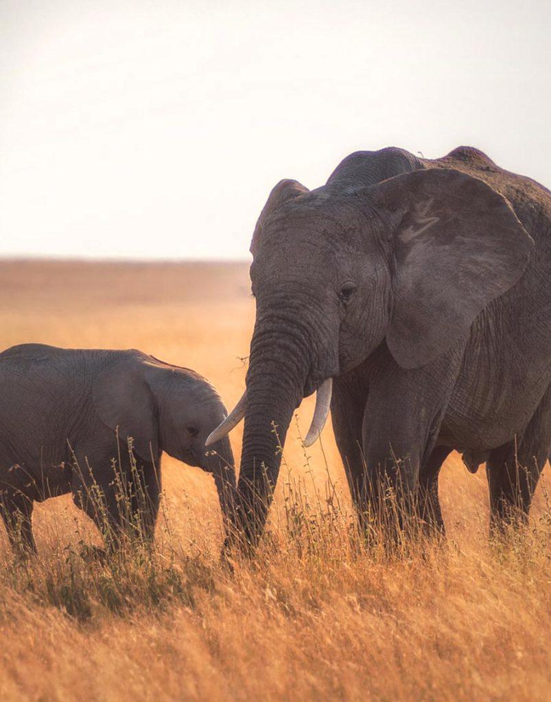 Tanzania-trip-bg